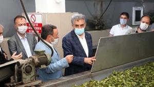 Arzumuz, isteğimiz çay alanlarının tamamen organik çay üretime geçişini sağlamaktır