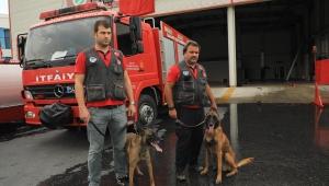 K9'lar arama kurtarma çalışmaları için İzmir'e gidiyor