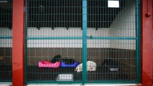 Büyükşehir anne köpek ve yavrularını koruma altına aldı