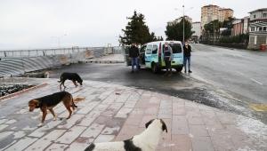 Sokak hayvanları için yem ve yiyecek bırakıldı