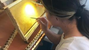 Sakarya Büyükşehir, ana arı üretimi eğitimleri gerçekleştirildi