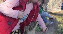 Karacalar Trabzon Botanik'te görücüye çıktı
